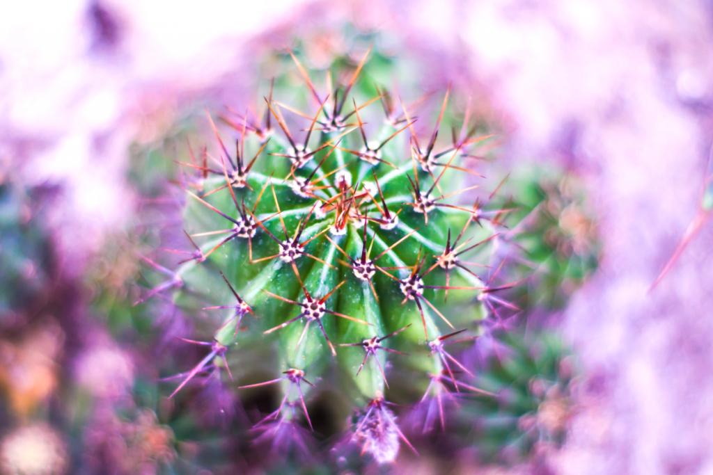 San-Pedro_Cactus-Retreat
